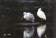 湧水湖をぶらぶら - 野鳥がいるから