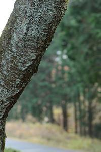 越冬中のキノカワガ - あれも見たいこれも見たい