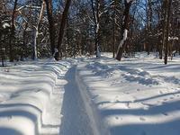 流氷まだ滞在中 - 北緯44度の雑記帳