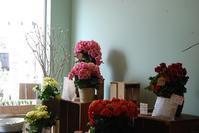 ベゴニア入荷しました - 花と暮らす店 木花 Mocca