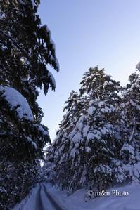 厳冬の山へ4 - 季節のおくりもの