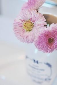 2/14春の花花の店 - 「あなたに似た花。」