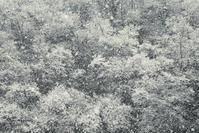 霧氷-垂井町- - びっと飴
