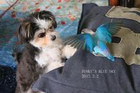 B.B&Chipo*「このキバが見えぬのか~!?」 - FUNKY'S BLUE SKY