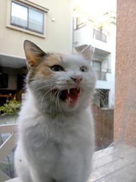 ごは〜ん! - ぶつぶつ独り言2(うちの猫ら2018)