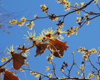 早春の花たち - 星の小父さまフォトつづり