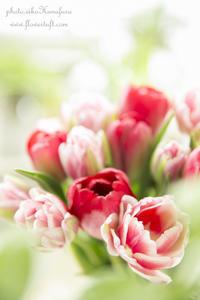しあわせな写真 - 幸せのテーブル*maison flowertuft-flowers&tablesXphoto