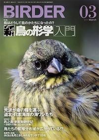 ★吉田くん・小島さんが執筆してます! - 葛西臨海公園・鳥類園Ⅱ