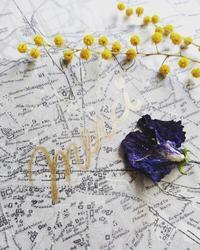 イベント初日、ありがとうございました - 「想いを伝える幸せの花」by FELICE Flower Design Studio & Regalo