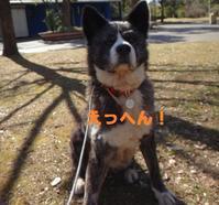 嬉しいできごと🎵🎵 - もももの部屋(家族を待っている保護犬たちと我家の愛犬のブログです)