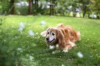神に近い存在 犬たちに感謝を込めて - 写像的空間