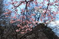 春一番♪もうすぐ春~ですねぇ~♪ - Let's Enjoy Everyday!