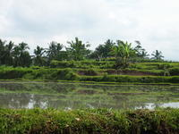 バリ島の不思議パワースポット「スバトゥの滝」で沐浴を① - CAFE NADI  ~バリ人店主が作るインドネシア&アジア料理~