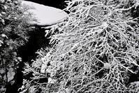 ☀・現在の積雪90㎝・・奥山渓谷の雪景色朽木小川・気象台より - 朽木小川・気象台より、高島市・針畑・くつきの季節便りを!