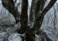 冬の巨樹 - 源爺の写真館