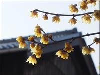 花見とサラダのお土産 - L'Ambiance du Midi
