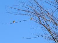 山の朝おやつと朝ワイン。小鳥さんの歌声を聴きながら~♪ - よく飲むオバチャン☆本日のメニュー
