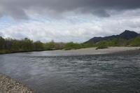 160429-0509 秋田 #1 玉川 サクラマス 58cm - river trekker