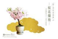 桜盆栽展はじまりました - Kitowaの日々