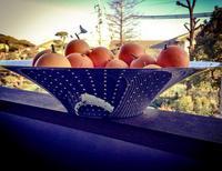 ブラッドオレンジ - @ interior space