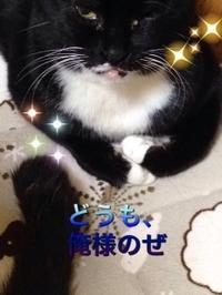 のらくろプレゼンツ動画♪ - 愛犬家の猫日記