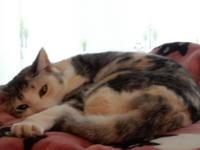 梅ちゃんプレゼンツ、動画♪ - 愛犬家の猫日記