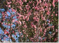 ◆春一番と尊敬する絵本作家・ブルーナさん、サヨナラ・・・ありがとう。 - ☆彡ちいさな幸せ☆彡別館