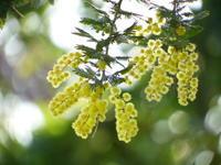 春の予感・・・ - aya's photo
