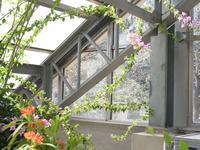 筑波実験植物園 - 庭日和