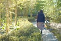 竹の庭。 - Yuruyuru Photograph