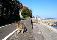 国東・鶴川からの海岸に棲む猫たち - Miemie  Art. ***ココロの景色***
