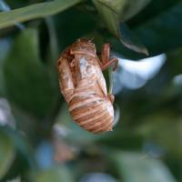 蓑虫 - 休日はタンデムツーリング