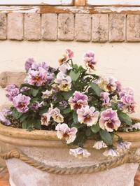 お花 - Madame petticoat の世界