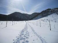 荒島岳ブナの森・雪上ハイク♪ - yukoの絵日記