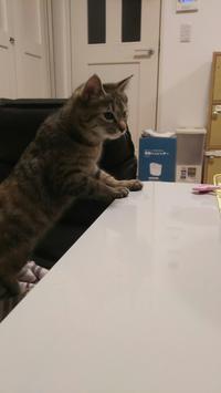 ハンターキャット - 猫に目薬