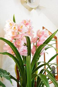 花を開かせましょう - Miwaの優しく楽しく☆