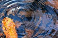 古池に五輪描くやミズスマシ - 『私のデジタル写真眼』