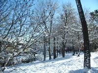 今年は雪が降らないのかなぁ2/23 - つくしんぼ日記 ~徒然編~