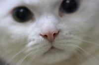 ネコの鼻 - 赤煉瓦洋館の雅茶子