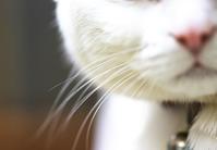 猫の髭 - 赤煉瓦洋館の雅茶子