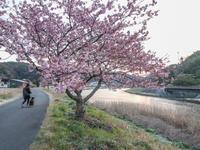 ワンコ旅伊豆編5みなみの桜と日野の菜の花 - にゃんてワンダホー!