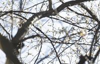 「日本人はどう住まうべきか?」(養老孟司/隈研吾新潮文庫)を読む。 - 「む一ちょ写真日記」