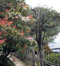 真の日本語・外国語の力をつけるには - イタリア写真草子 Fotoblog da Perugia