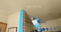 ぶんぶんB.B~♪ - FUNKY'S BLUE SKY