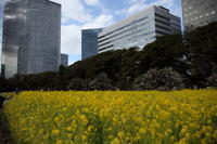「きざし」東京浜離宮 - 「せ」の写真集 刹那の光