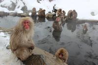 【やってみよう!】クレイバスおうちのお風呂が美人の湯 - ライブラナチュテラピーの aroma な話