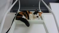 高いところがお好き - ヨーキー アイくんのおうち -保護猫里親探し活動中-