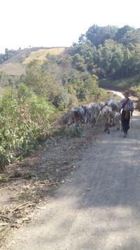 ダヌー人の村へ - アジアⅩのブログ