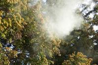 スギ花粉症最近の治療について - あさひ町榊原耳鼻咽喉科  院長のブログ