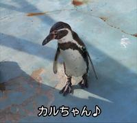 ペンギン♪ - 犬が西向きゃ尾は東♪